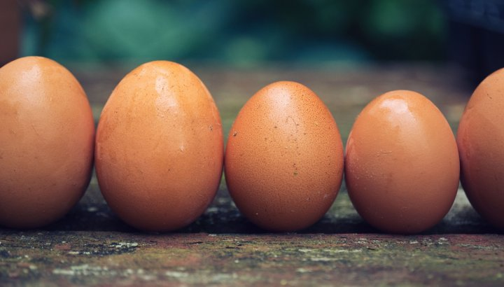 farmers market eggs, photo by Lauren Gallagher