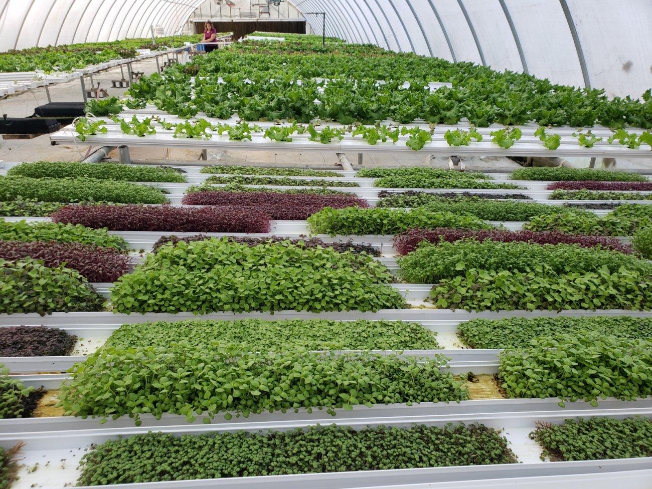 Hydroponics greenhouse at Farm Fresh Ventures